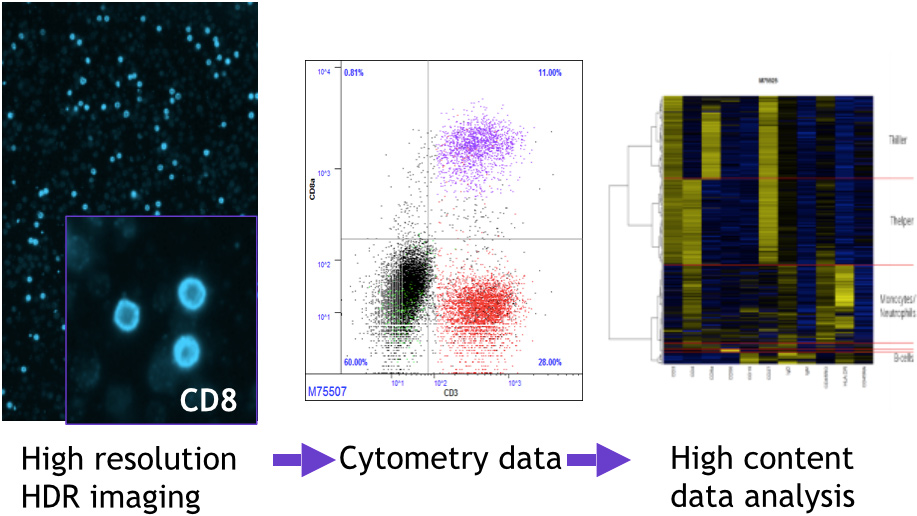 high multiplexing in flow cytometry